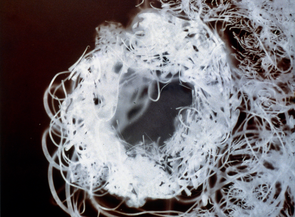"GA010 Gold albumen photogram, 16"" x 24"", 1999"