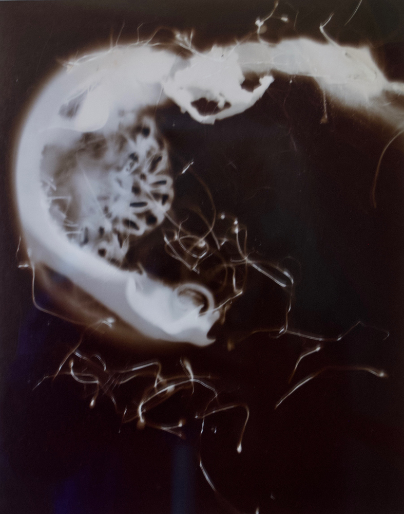 "Who Are You?1 Gold albumen photogram, 24"" x 16"" 2000"