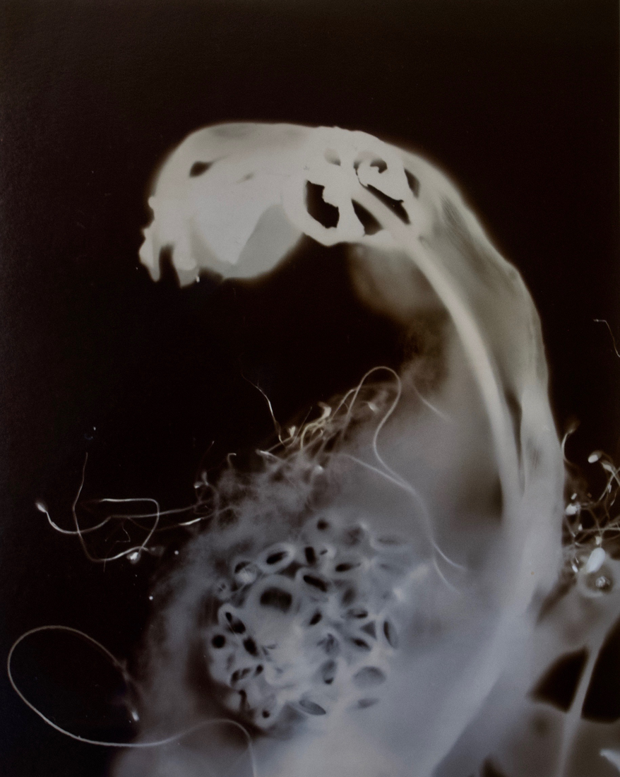"Who Are You?2 Gold albumen photogram, 24"" x 16"" 2000"
