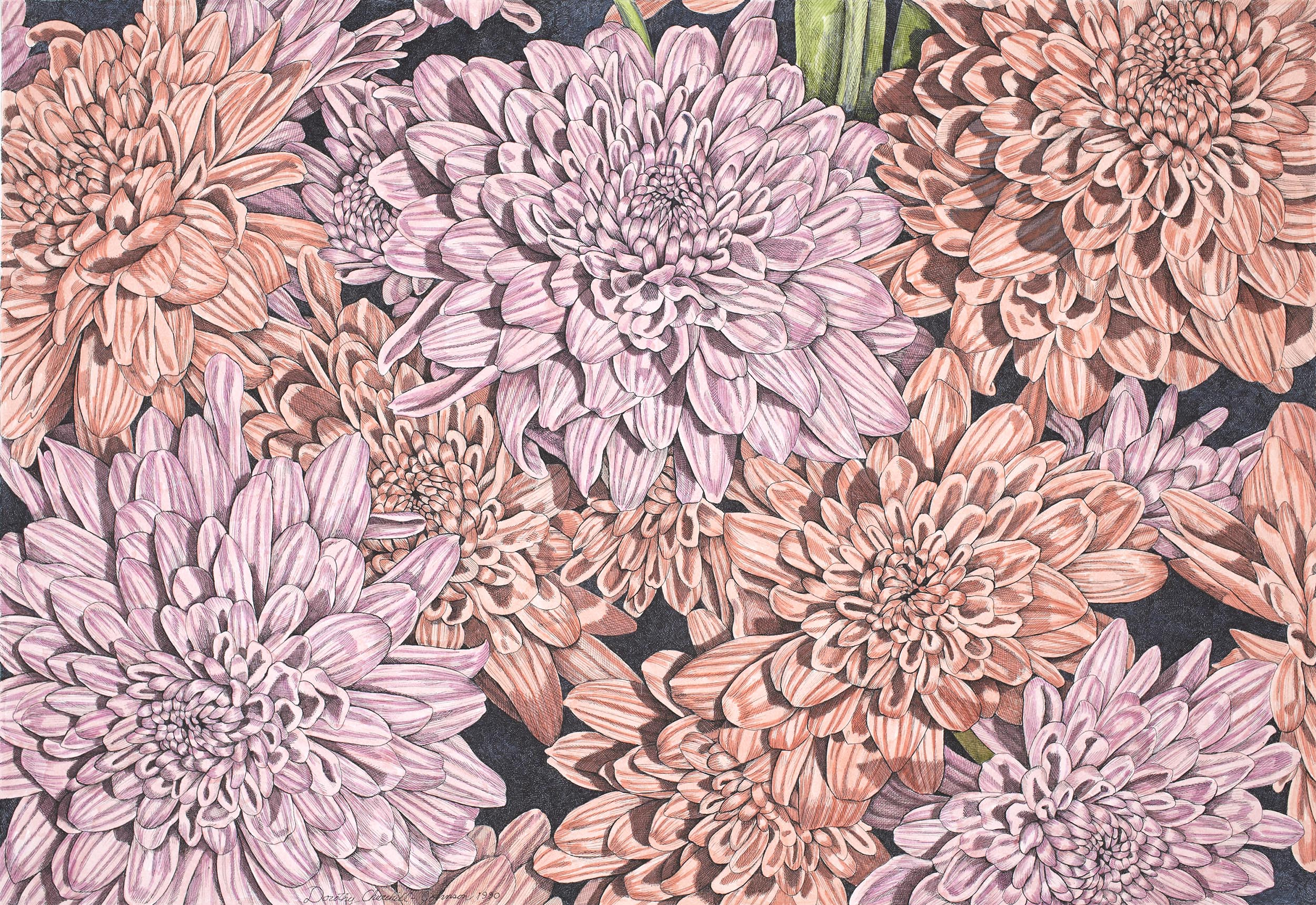 Chrysanthemums III, 19 x 28 inches