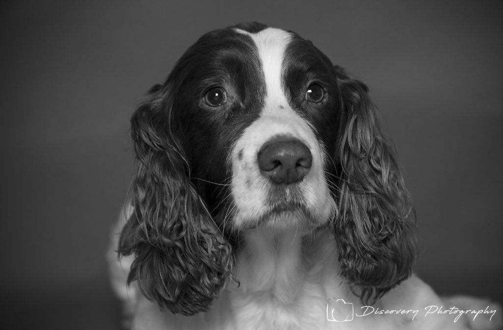 Pet studio photography