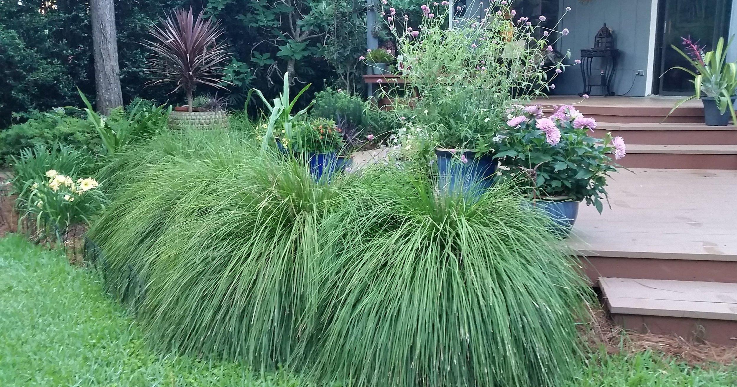 Breeze Grass