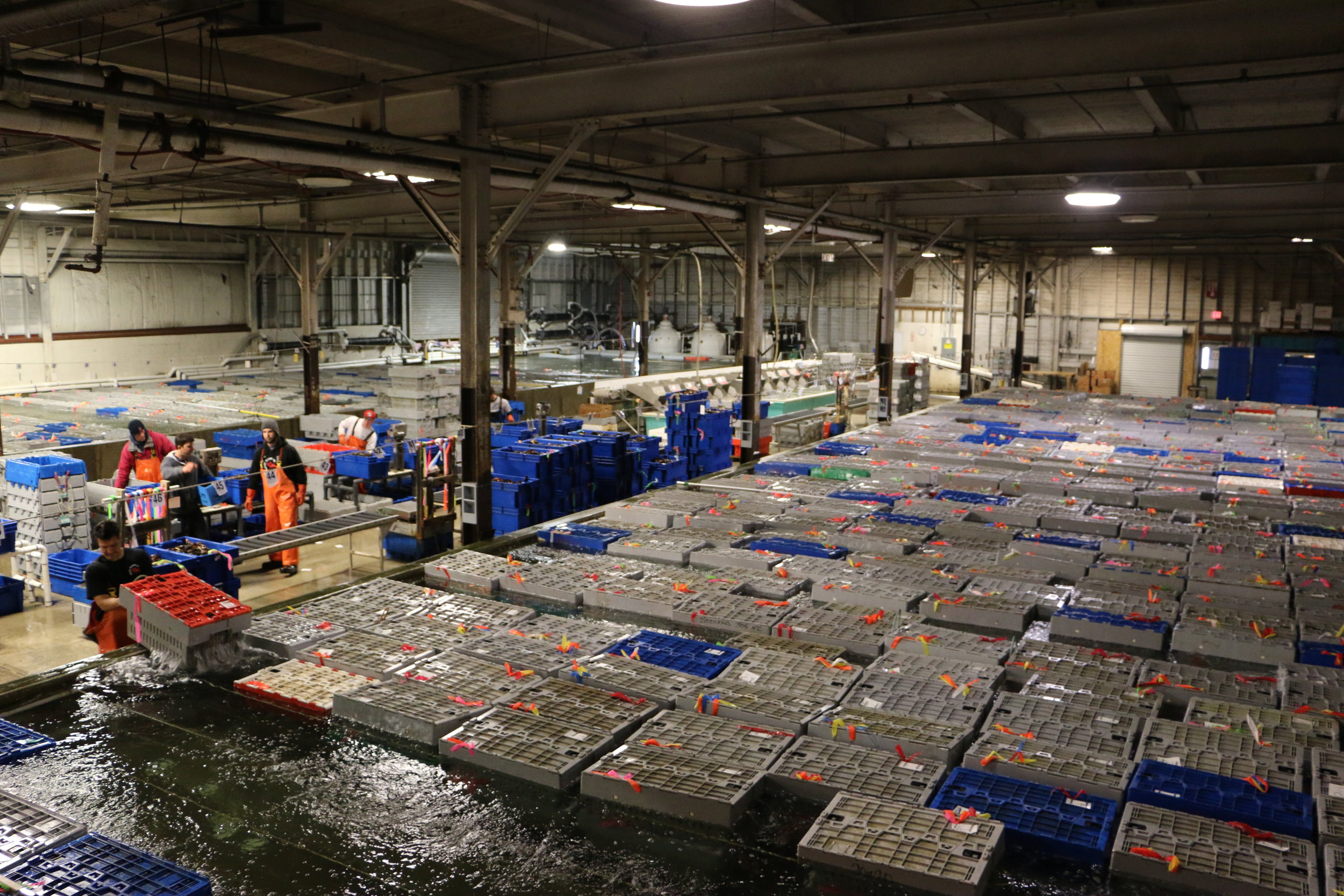 Ready Seafood's Live Lobster Facility in Portland, Maine.