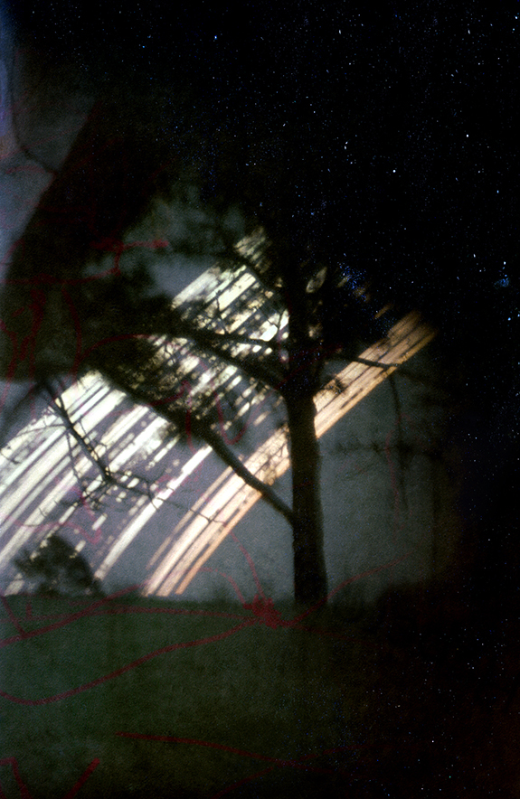 semester to semester/ tree in front yard: 6 month pinhole exposure, Houston, TX