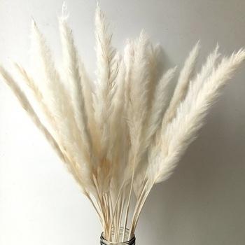 Natural-dried-small-pampas-grass-Reed-Plume.jpg_350x350.jpg