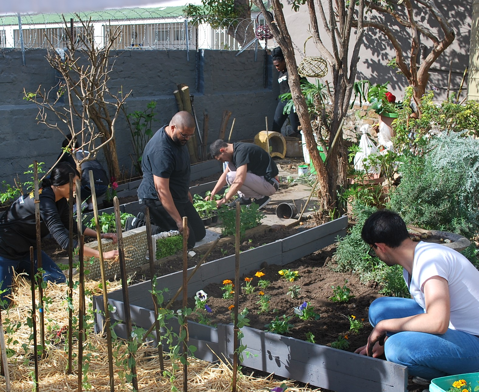 2. Food Garden at Old Age Home.jpg