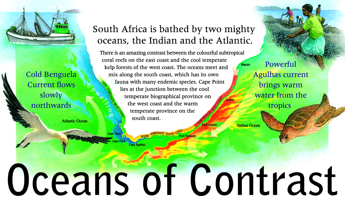 (Oceans of Contract): The South African coastline is bathed by mighty oceans (Image credit: Coastcare Fact Sheet Series produced by the former Department of Environmental Affairs and Tourism, 2006. Used with permission).