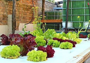 VegetablesatUltimateLivingCentre.jpg