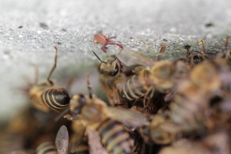 Bees UjuBee.jpg
