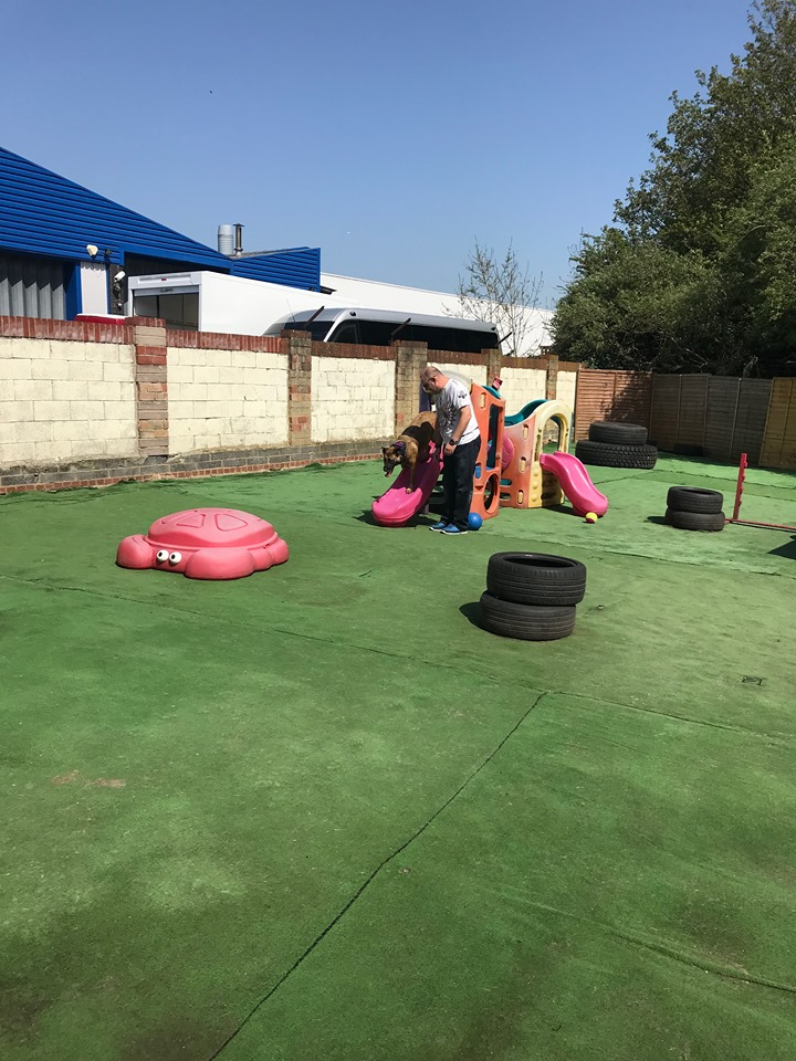 Doggy Daycare Solent - Reactive Play Sessions