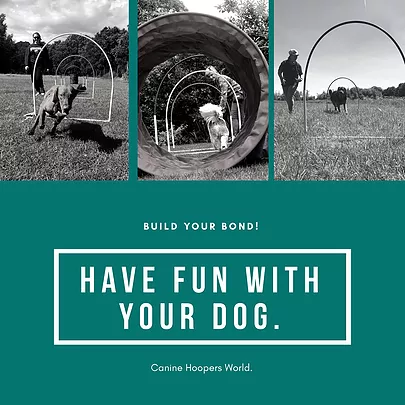 Canine Hoopers - Doggy Daycare Solent