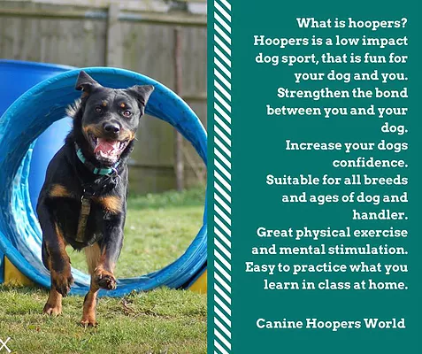Canine Hoopers - Doggy Daycare Solent 2