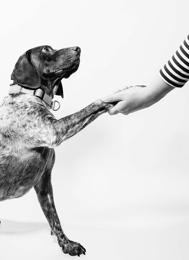 Eläinten puolesta - Haluamme palvella ensisijaisesti eläimiä omistajien tarpeita kuitenkaan unohtamatta. Kartoitamme aina ensin tarvittavat toimenpiteet ja hoidot jonka jälkeen annamme suuntaa antavan hintatiedon. Haluamme tarjota läpinäkyvää palvelua ilman piilokustannuksia. Klinikamme kulmakiviin kuuluu eettisesti oikea palvelu eläimille ja omistajille.