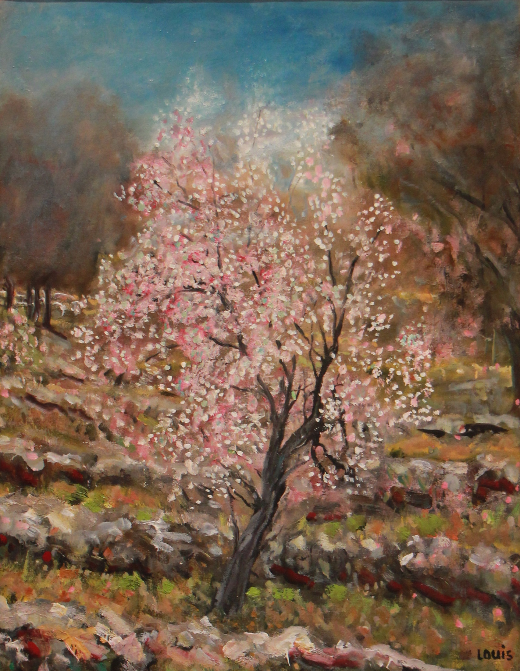 The Almond Tree  60 x 56 cm, oil on canvas. #A2 - 2015