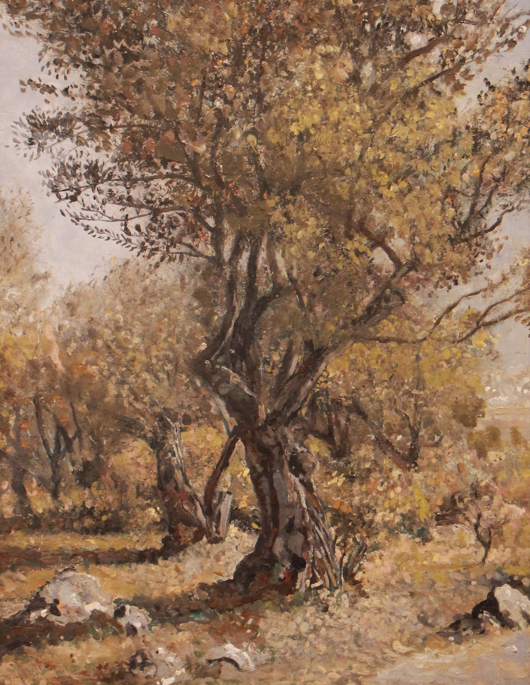 The Olive Tree  60 x 52 cm, oil on canvas. #A1 - 2012