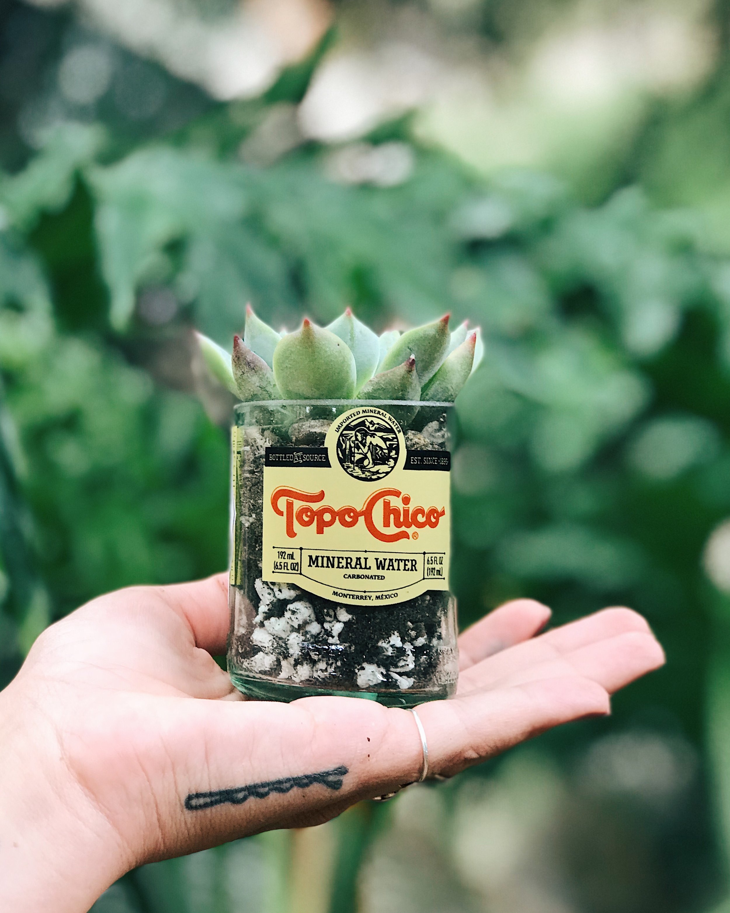 Mini Topo Chico planters. Sold with out the plant so that you can put what ever you want in and watch it thrive. Our planters come with drainage holes, so that your plant can drain all the way though and live a happy life.