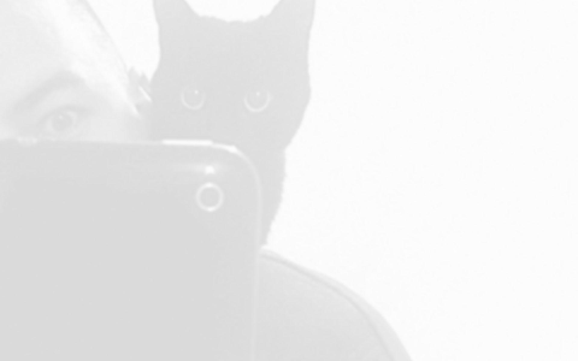 timintro.jpg