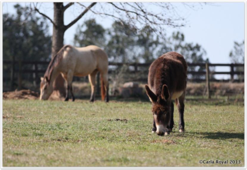 4-Serenbe-donkey.jpg