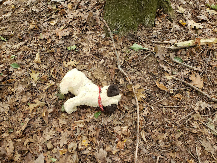 Pug stuffed animal we found deeper in the woods around the cemetery - after seeing a man walking his pug a few minutes earlier.