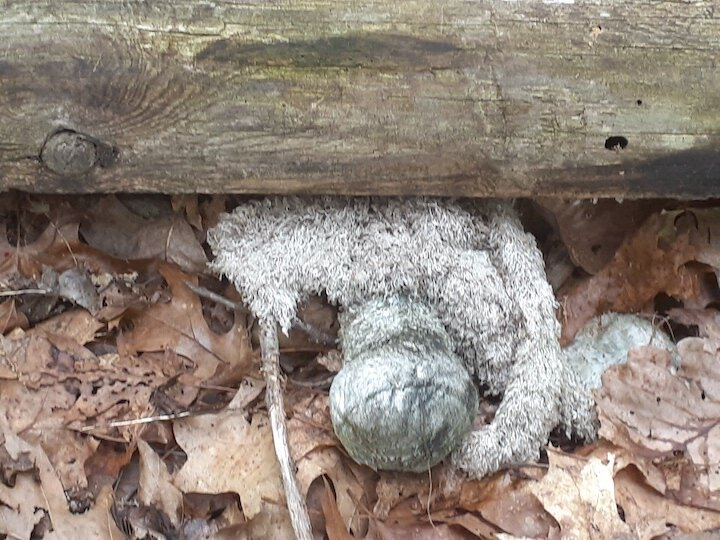 The remains of the pony stuffed animal, under a fence rail.