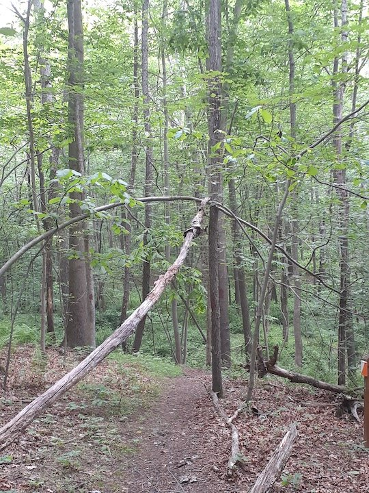 Possible tree structure found over the trail - about where we saw the eyeshine a few nights before.