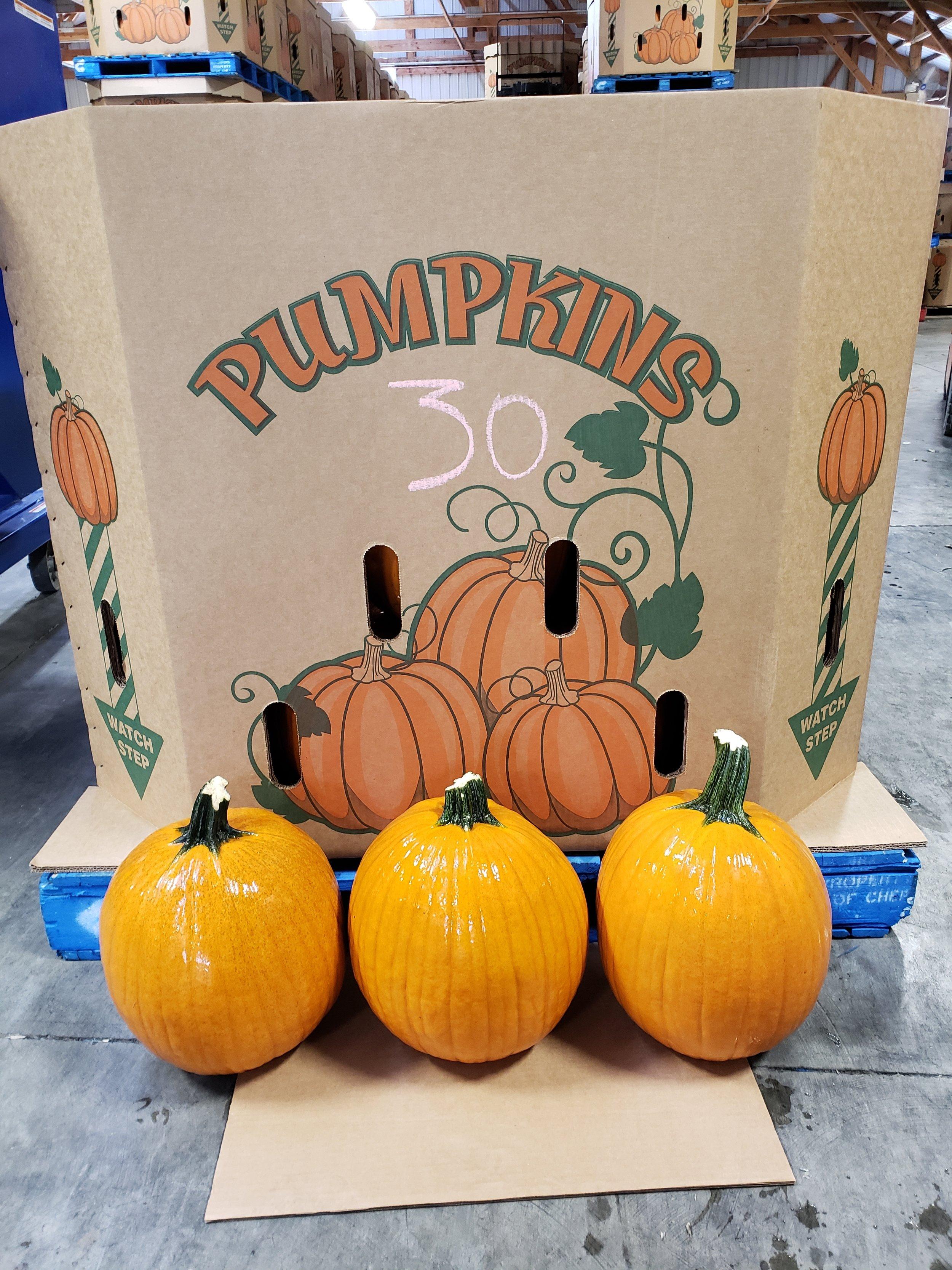 30ct pumpkins 4.jpg