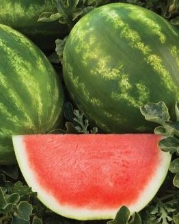 Joyride+Watermelon.jpg