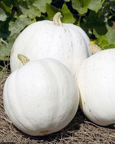 white+pumpkins.jpg