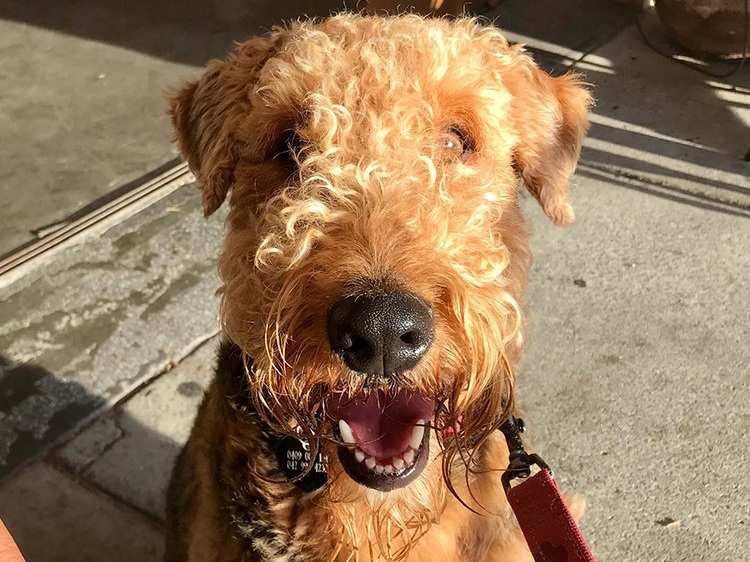 This is my dog, Walter. Doesn't he just brighten up the page? (NB: If I wanted to be clever, I'd have used an image related to SEO copywriting, plus an alt tag. But doggies.)