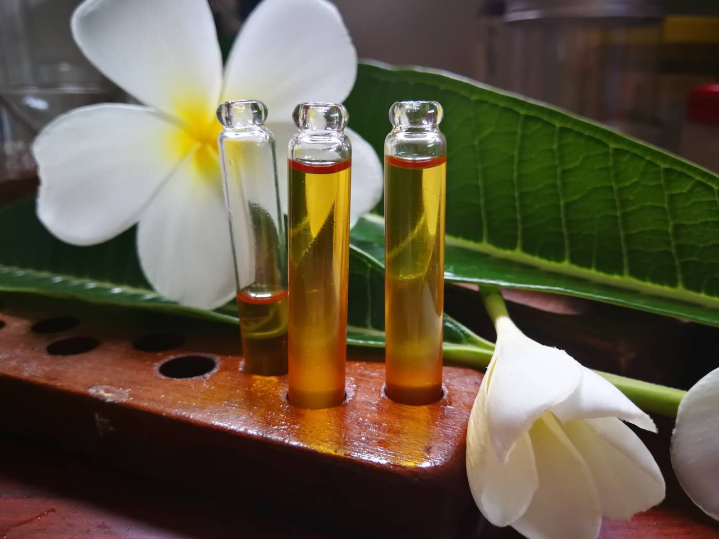 Frangipani oil and its flowers, naturally cultivated and lovingly hand crafted on-site at Tony and Tha's home-based plantation in the Vietnam countryside near the border of Cambodia.