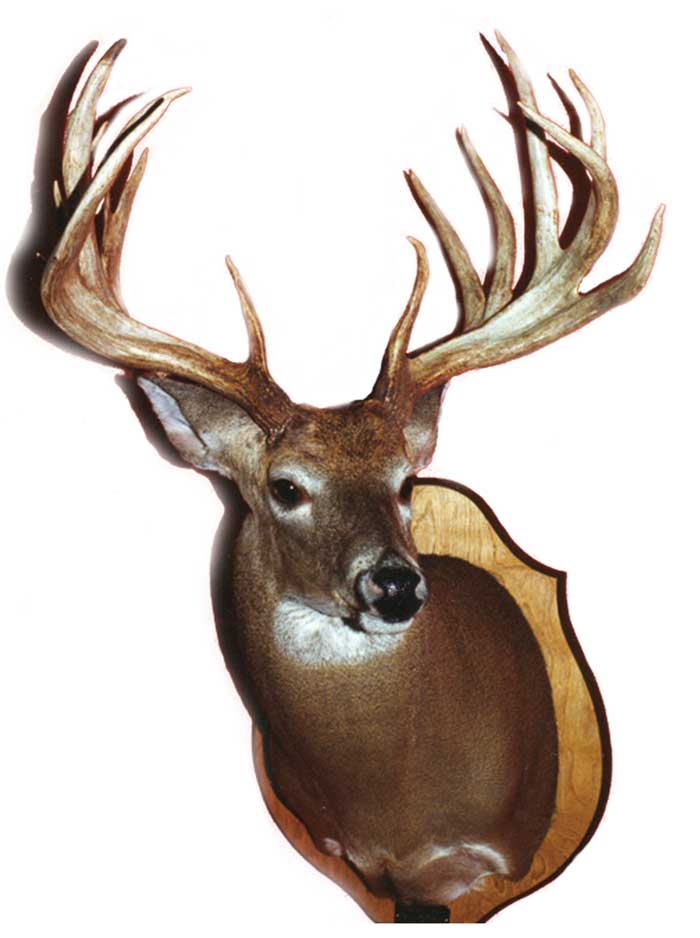 "#1 Overall Typical - Joe gandy - 213 6/8"" Marengo County 1993Joe Gandy took this tremendous buck on his own private property in Marengo County on January 31, 1993."