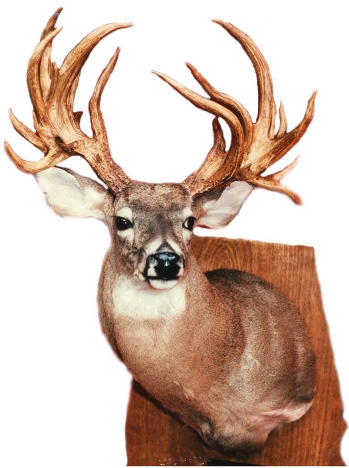 "#1 Overall non-typical - 310"" Greene County 1956""By chance!"" That seems to be the way so many ""super bucks"" have been located, and the monster non-typical taken by soft-spoken David K. Melton fits right into that category as well."