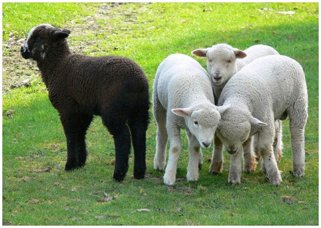 Photo: http://www.tricycle.com/blog/meditation-month-day-22-buddhist-black-sheep