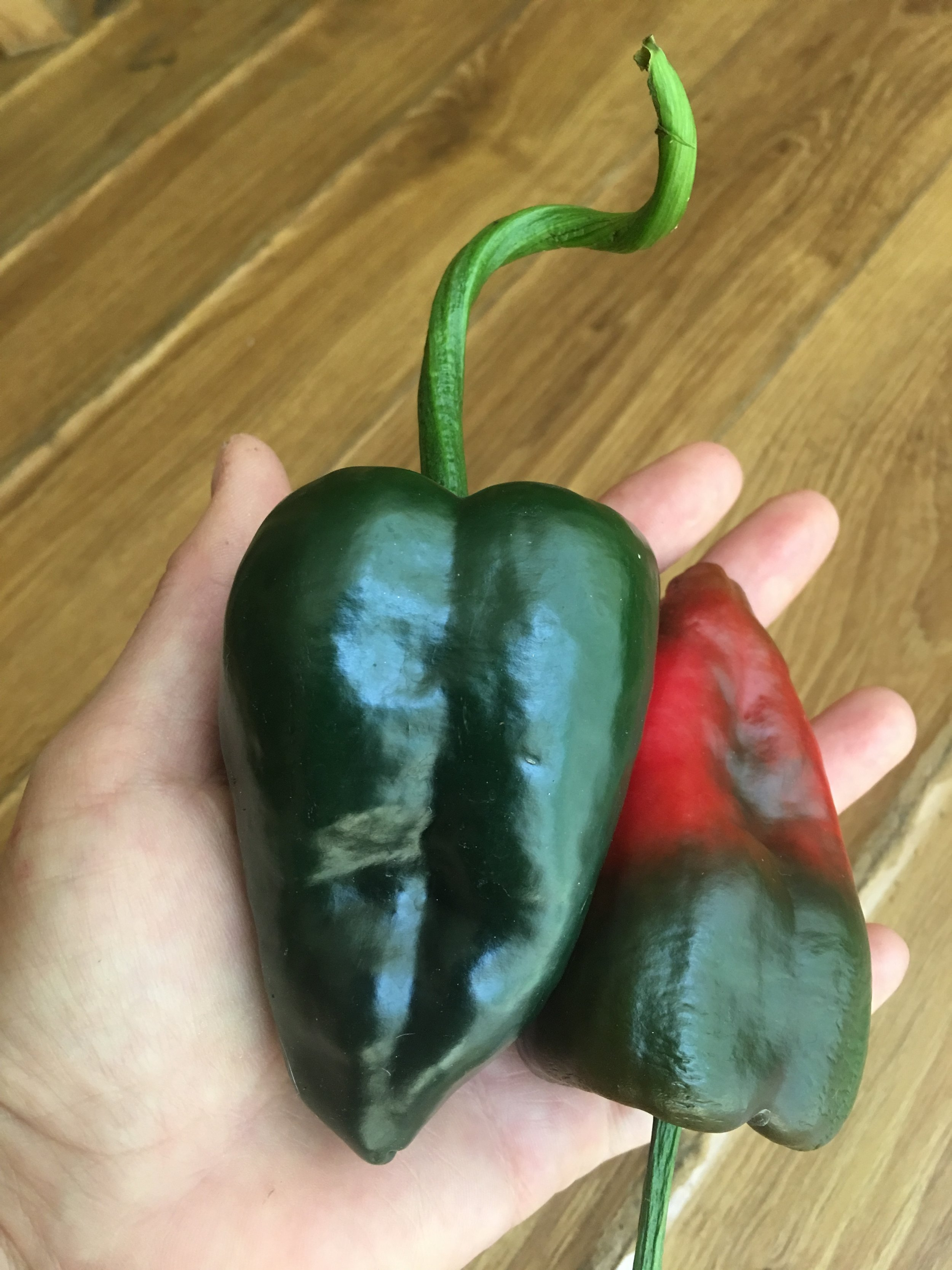 Poblano/Ancho - Scoville heat units (SHU):1,000 - 2,000These are the smallest I could find! They are prolific—lightly spicy when green, a little heat when dried—perfect for stuffing!