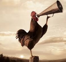 Photo: http://www.zingbeauty.com/images/goodmorning-rooster-crowing.jpg