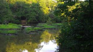 creekthree.jpg