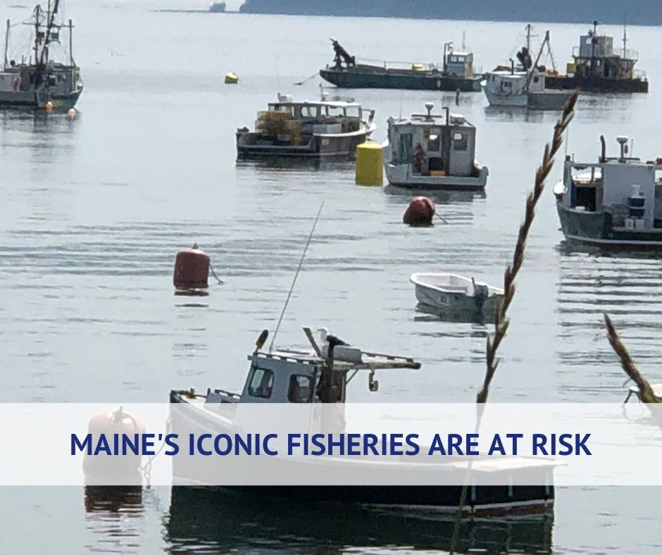 Meet Maine's Fishing Community (10).jpg
