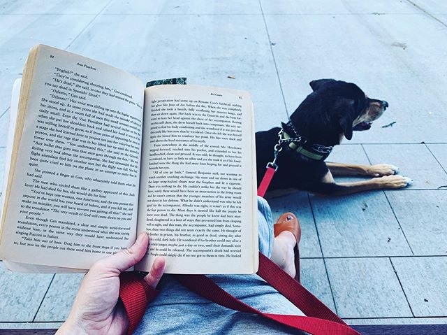 City reads with my city dog 🐕 Happy weekend, friends! I'm headed to a friend's house in a bit for a little reading party to celebrate National Read a Book Day 🤪What are you reading this weekend, friends? #zoeythesnakedog