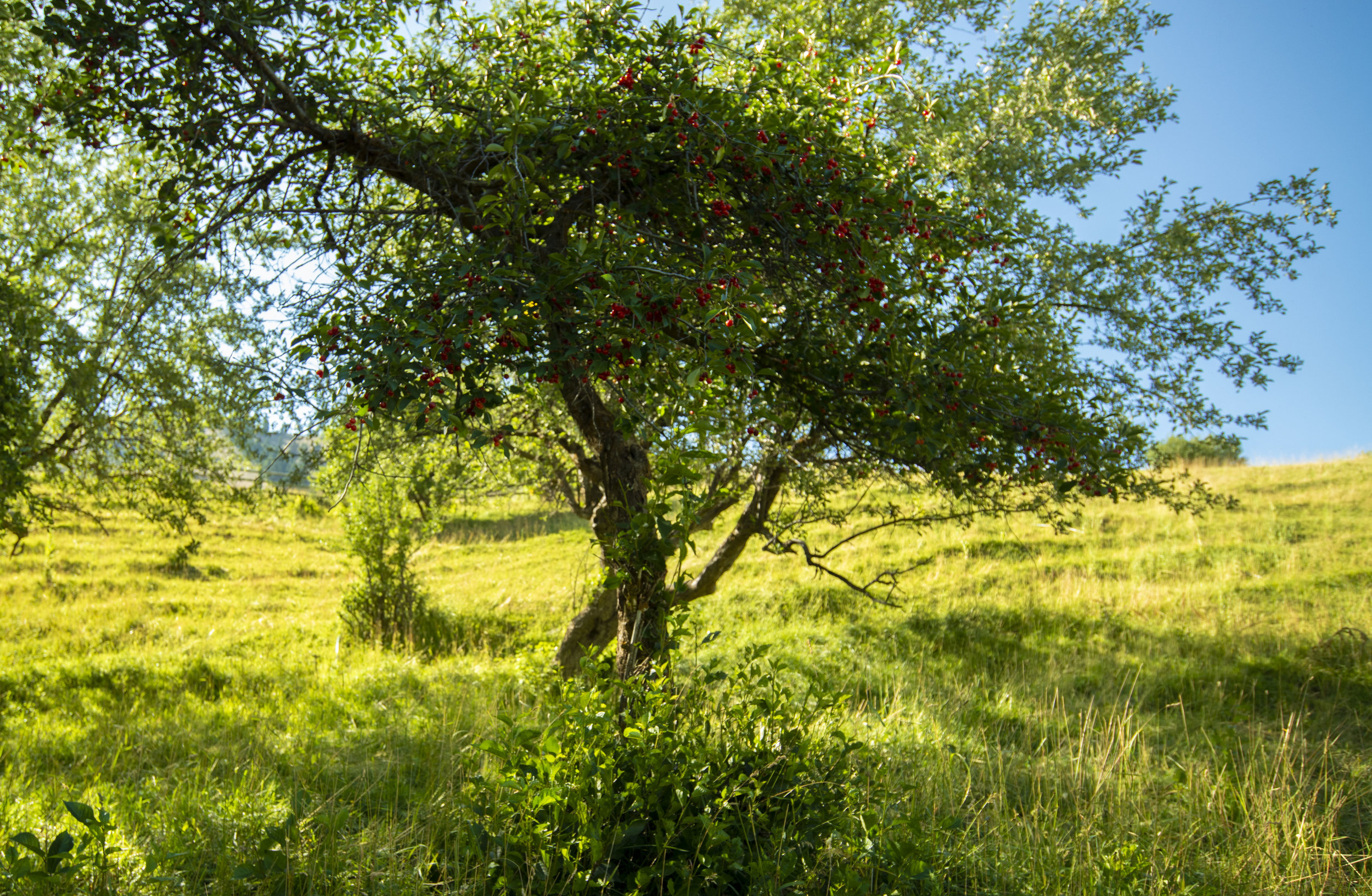 Orchards_1.jpg