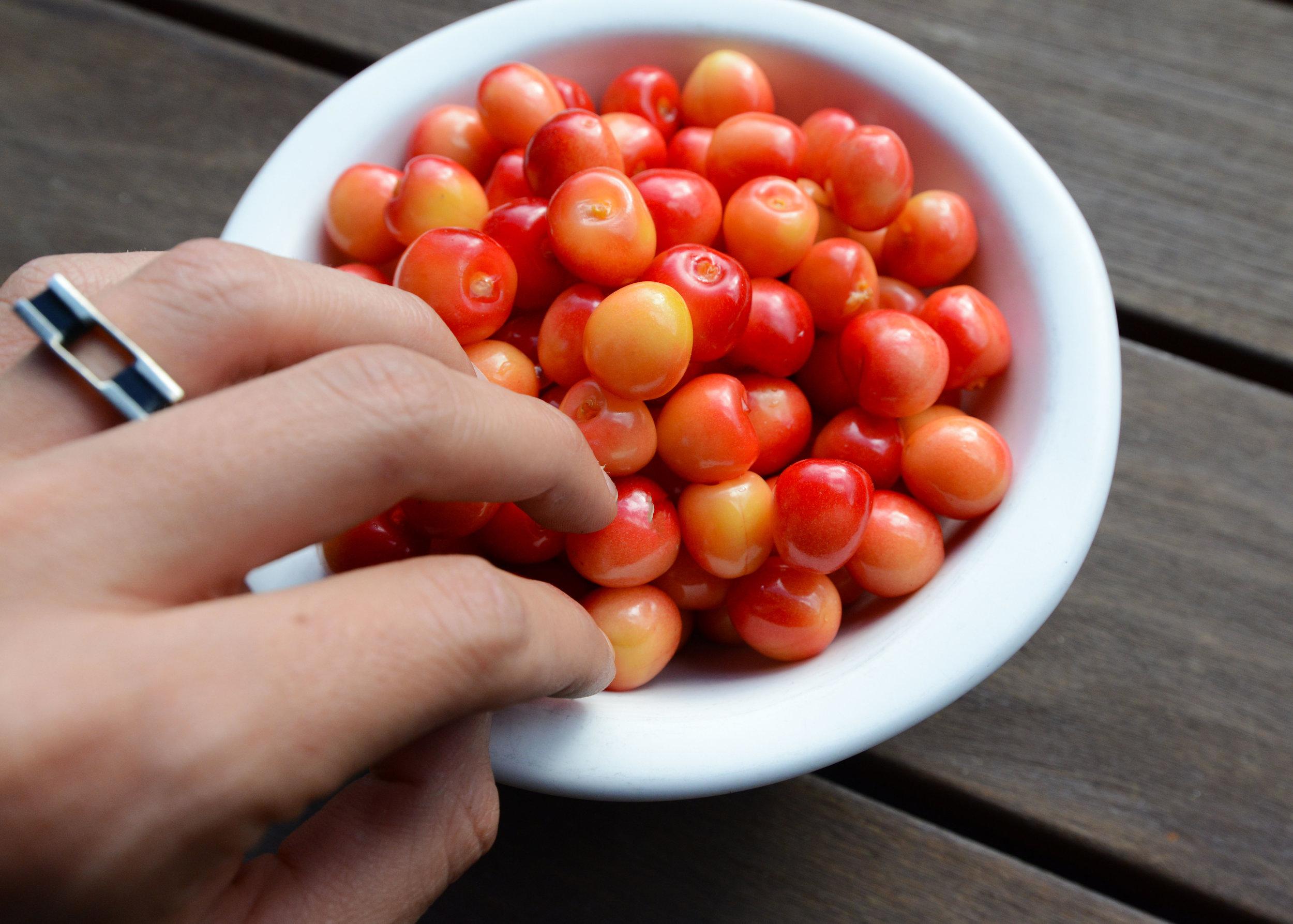 Wild_Cherries.jpg