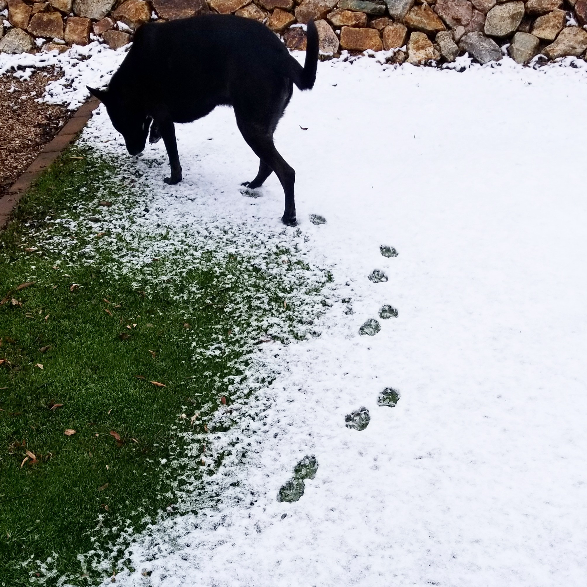 Matilda checking out the snow!