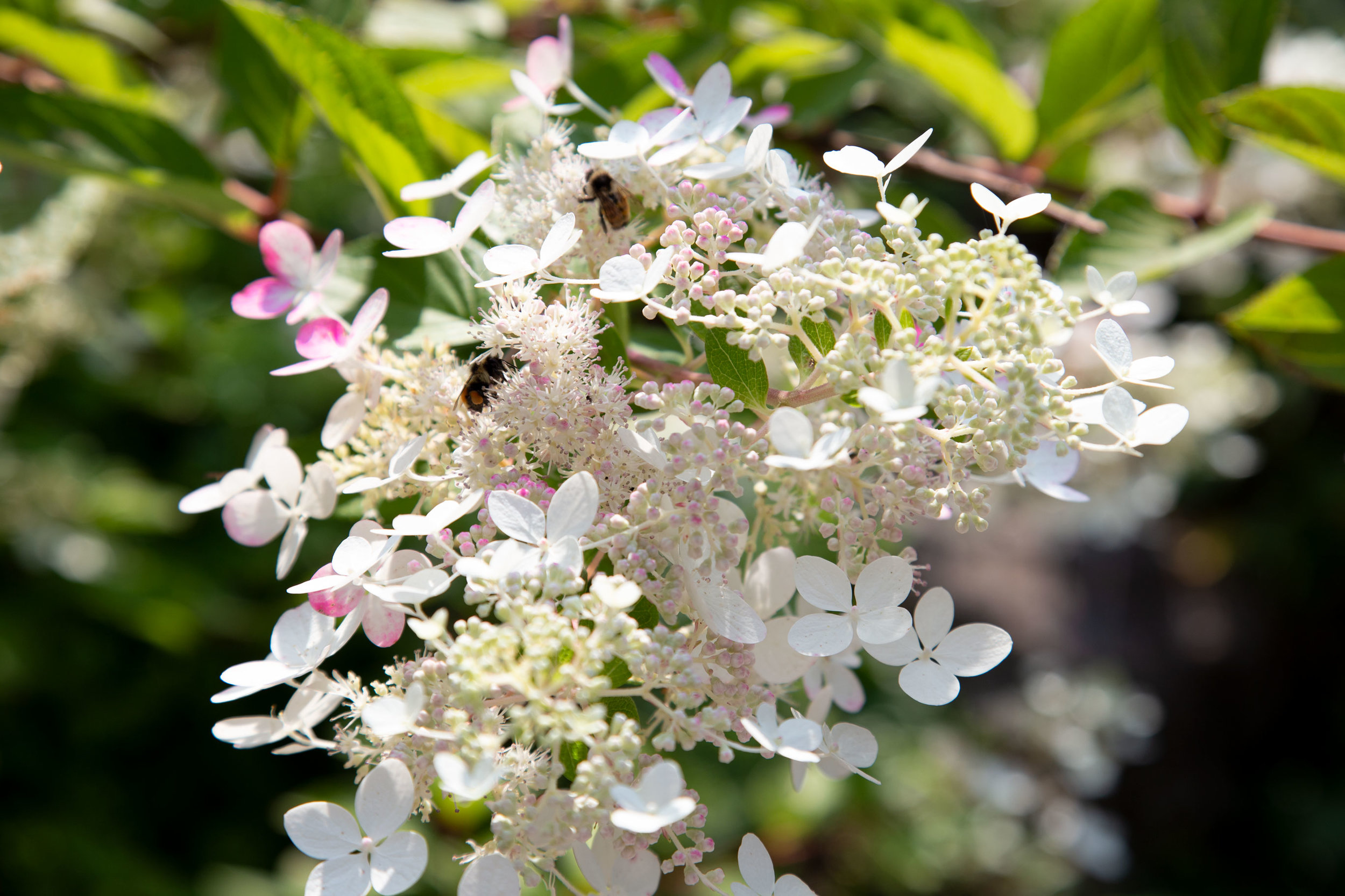 whi-flowers-and-bees-sm.jpg