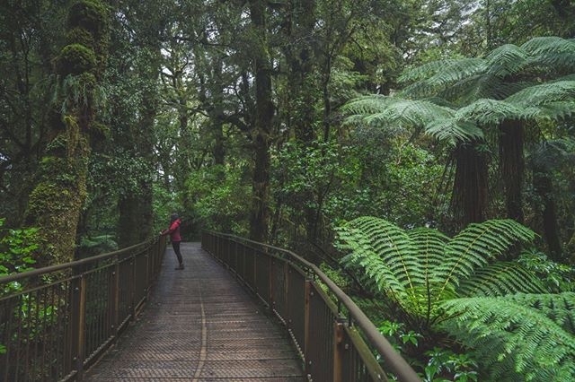 *Not Jurassic Park . . . . #lonemoosebackpackers #fiordland #mildfordsound #ferns #forests