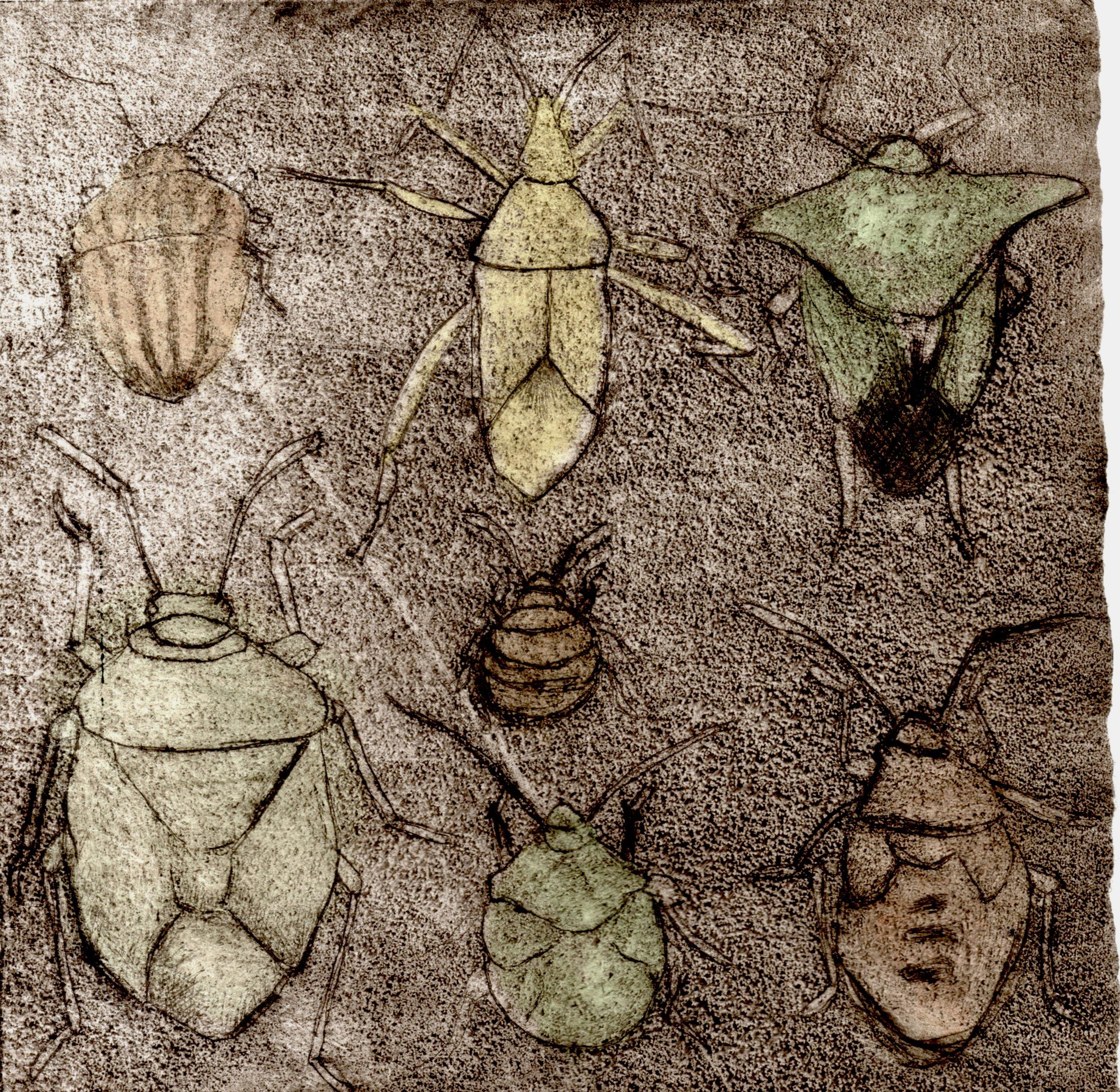 Pest002.jpg