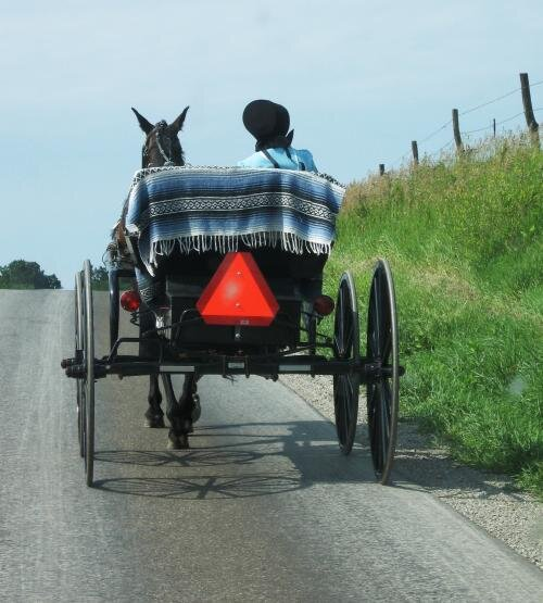 lady riding buggy.jpg