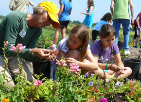 Community Gardens - Growing minds and food together