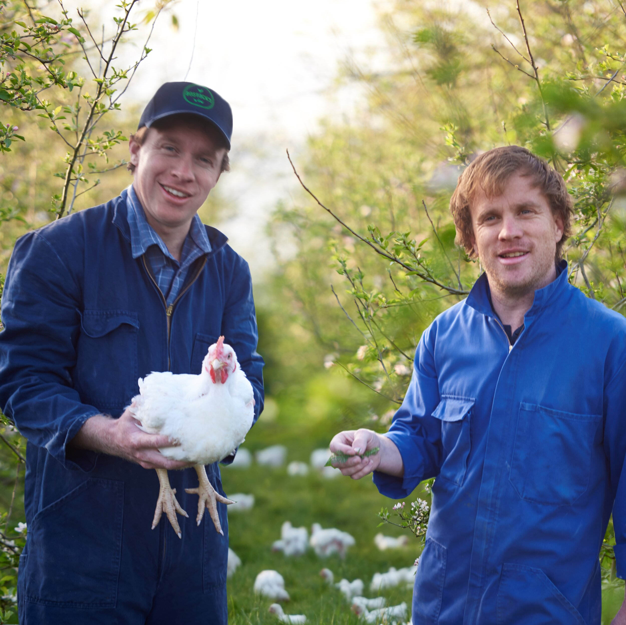 Bostock organic free range chicken2.jpg