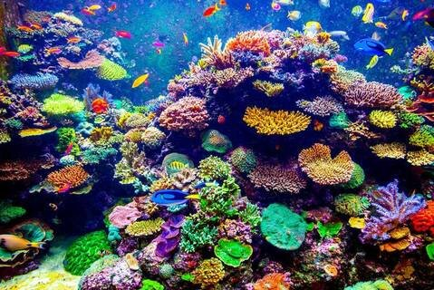 Colorful-coral-reef.824x0_q71_crop-scale_large.jpg