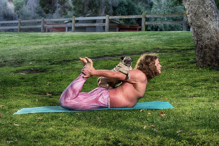 pug yoga bow pose.jpg
