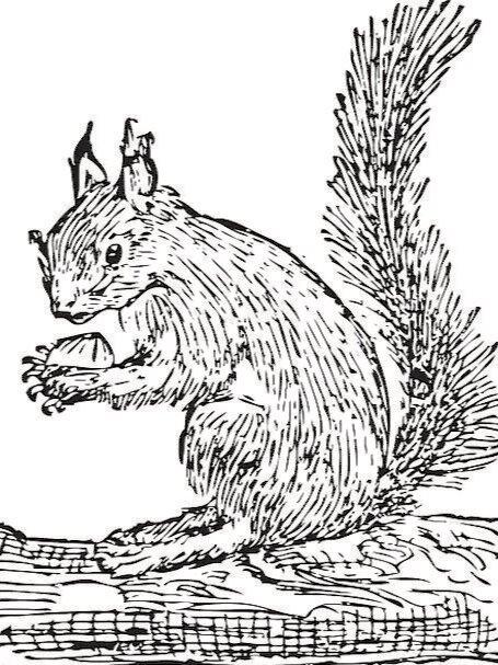 Squirrel-Collector-Nature-Animal-Storing-Free-Imag-2794.jpg